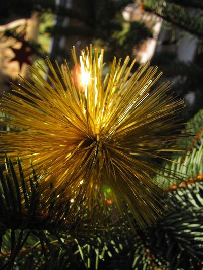 Celebration Christmas Decorations Christmas Tree Christmastime Close-up Decoration Festive Festive Season Gold Lametta Pine Softness Winter Xmas