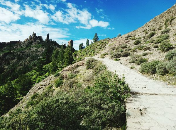 EyeEm Selects roque nublo path Nature Outdoors Day Tree Tranquility Roque Nublo Gran Canaria