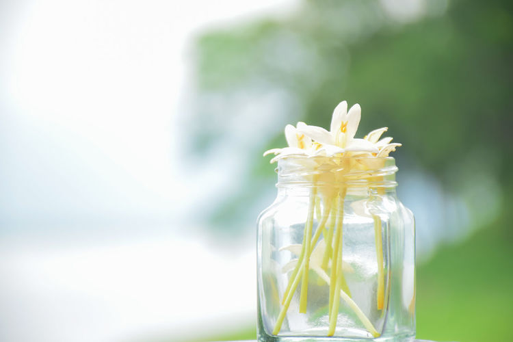 Close-up of white flower in glass jar on table