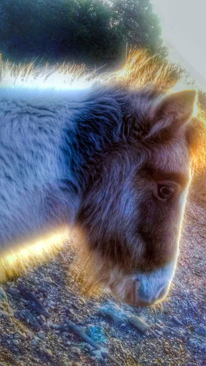 Horse Farm Life Mini Horse Farm Animals Countrylife Country Life Naturelovers Rural Scenes EyeEm Nature Lover EyeEm Animal Lover
