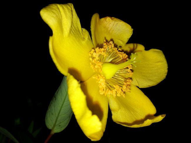 Night Flower Nightimephotography Flower Garden Photography Nature Photography Night Photography Night Time Photography Macro Fine Art Still Life