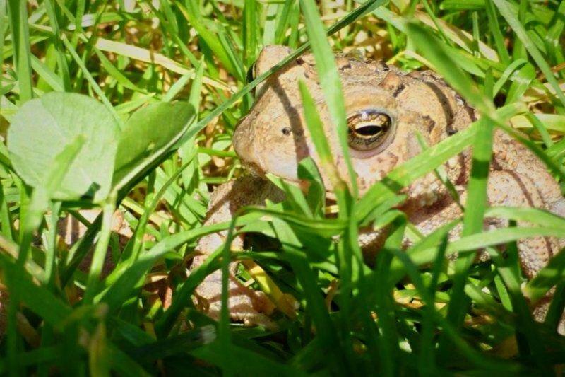 Nature Frog Outdoors SlateRun Pennsylvania Pinecreek Animals Wildlife Color Photography Sunshine