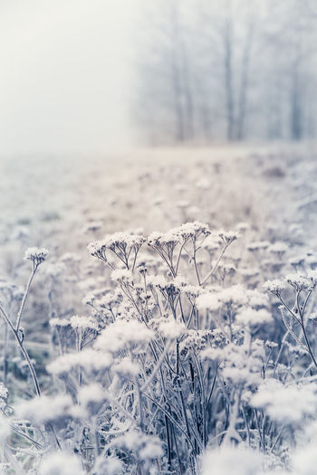 Beauty In Nature Close-up Field Frost Frosty Hoarfrost Landscape Nature Nature Photography Rime Snow Tranquil Scene Weather Winter Flowers Landscapes Winter Wonderland Winter Landscape
