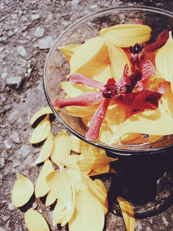 Enjoying Life Taking Photos Flowers#nature#hangingout#takingphotos#colors#hello Worldflorafauna F