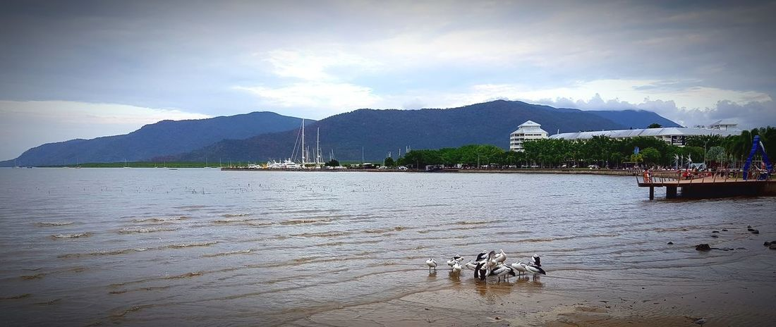 Mountain Beach Sand Outdoors Day Water Cloud - Sky Sky Sea Nature Birds Weekend Animal Themes First Eyeem Photo Tranquility Paradise Travel Seagulls Vacations Landscape Cairns, North Queensland, Australia
