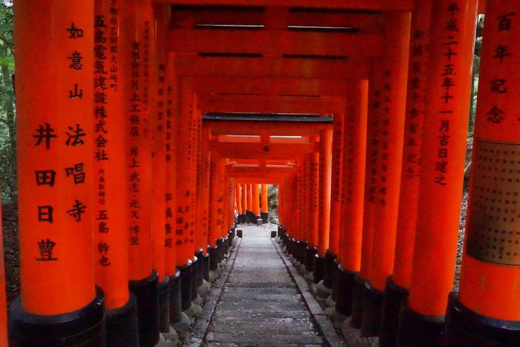 Torii Gates Torii Gate TORII Tori Orange Color The Way Forward In A Row Tourism Travel Destinations Spirituality Architecture Shrine Red Place Of Worship Religion Travel Built Structure Architectural Column