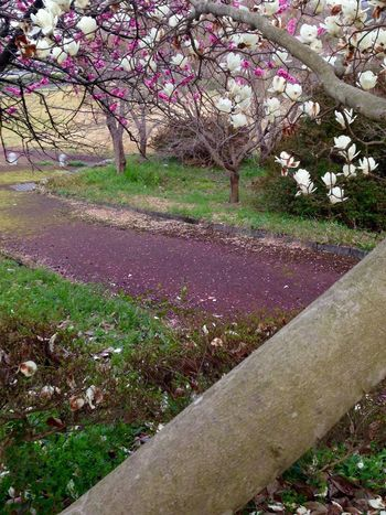 Walking To My 🚗 Flower Growth Tree Nature Pink Color Beauty In Nature Springtime Blossom Saikai City Japan Plant No People Outdoors Branch Fragility Day Cherry Blossom Scenics Cultures Flower Head Rhododendron