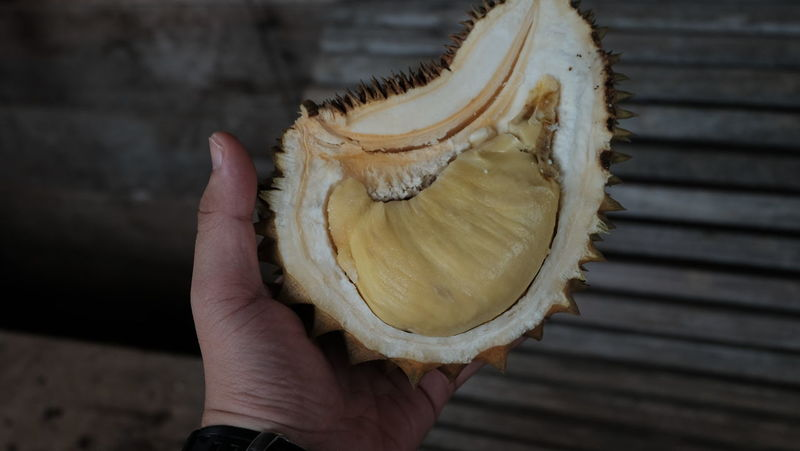 durian Durian Durians Close-up Day Durian Fruit Focus On Foreground Food Food And Drink Freshness Fruit Healthy Eating Holding Human Body Part Human Hand Indoors  King Of Fruit King Of Fruits MusangKing One Person People Ready-to-eat Real People