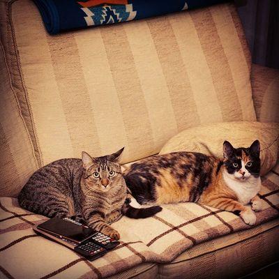 Sisters! Catsoftobago Catsofinstagram Gatos Itzi &lego itzi lego pets xperiaZ1 igerscats quietas