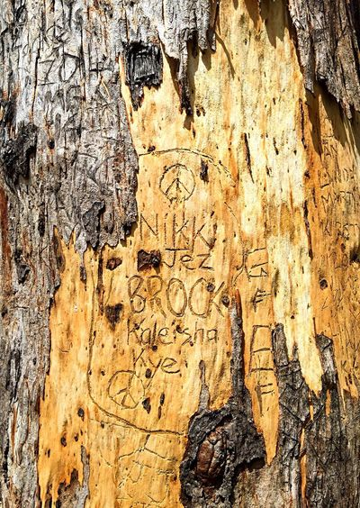 Bark Carving Tree Marking Markings Nature Abstract Tree Texture Carving Bark Carving Alphabet Alphabet Peace Sign  Writing On Tree Writing In Nature Writing Wilderness Detail Tree Nature Vandalism Carving Names Carving In Wood Initials Bark Tree Bark Tree Carving Karri Trees Nature (null)Margaret River Region Leeuwin Naturaliste Forest