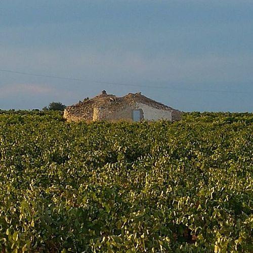 Otra imagen que no verás en otros sitios que no sean LaMancha , concretamente Tomelloso con sus Bombos únicos. Enoturismo Vino Wine Vineyard WINEUP Winetube