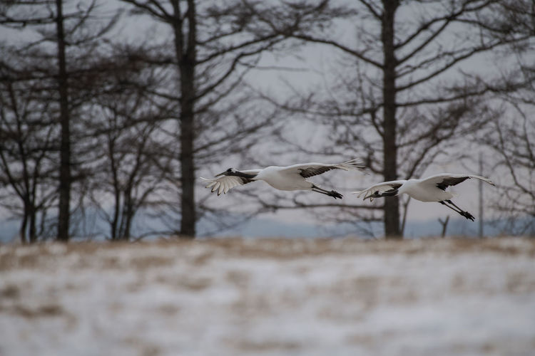 Birds flying over land during winter