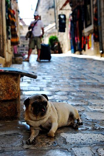 Street Dog City