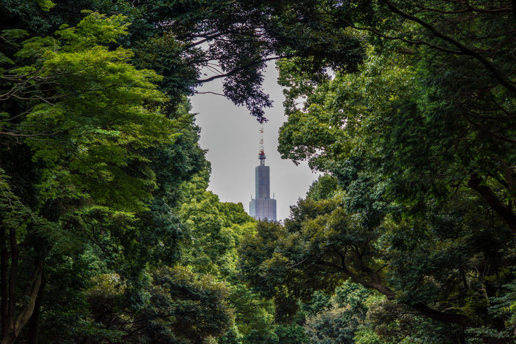 Shot in Tokyo Meji Park shrine. A random skyscraper through the trees of the park. Japan Meiji Shrine Tokyo Architecture Building Exterior Built Structure Day Growth Nature No People Outdoors Sky Travel Destinations Tree