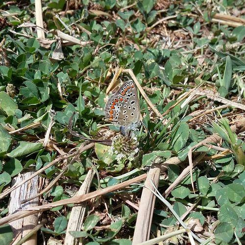 Butterfly Butterfly Collection Farfalla Farfallina Beauty In Nature Colorcolorcolor EyeEmNewHere Animal Wildlife Nature Multi Colored Insect diversa esposizione... Stessa farfalla!!! 😍😍😍