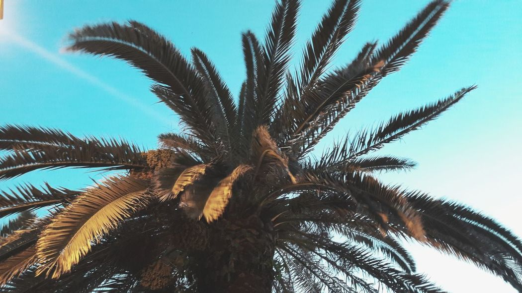 EyeEmNewHere Palm Tree Low Angle View Tree Nature Day No People Beauty In Nature Close-up Branch Outdoors Leaf Tropical Climate Sky Growth Followme EyeEm Nature Lover Likesforlikes Kastriotmetolli GTA V