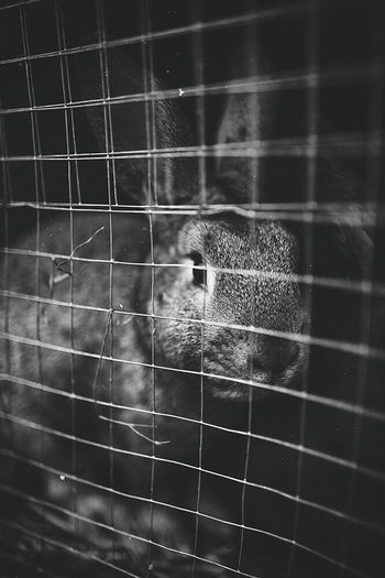 One Animal Animal Themes Cage Animals In The Wild Animal Wildlife No People Mammal Indoors  Trapped Close-up Day Nature Pets