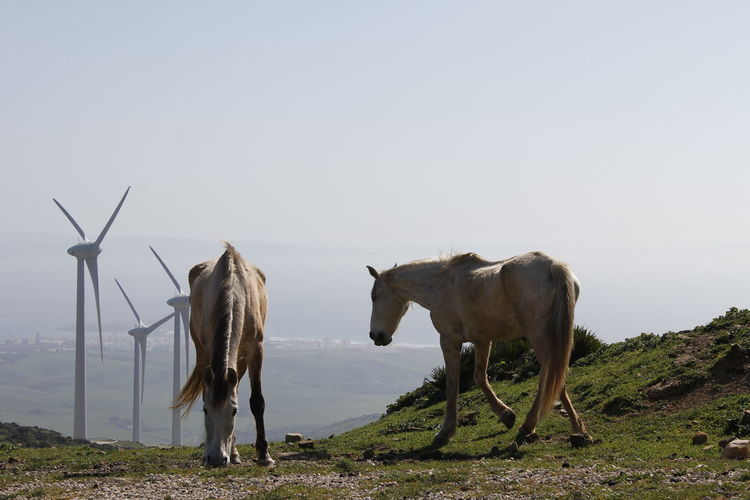 Horses on field by windmills against sky