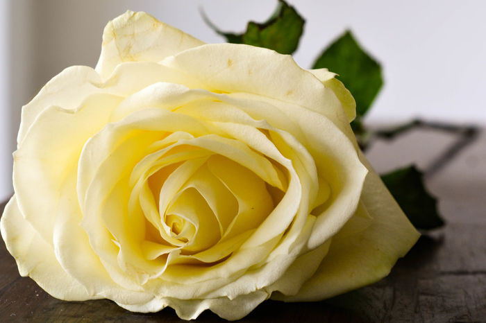 Beauty In Nature Bouquet Close-up Day Flower Flower Head Flower Stem Flower Stems Flowers Focus On Foreground Fragility Freshness Indoors  Love Nature No People Petal Romance Romantic Rose - Flower Rose Flower Rose Flowers Roses Stem Yellow