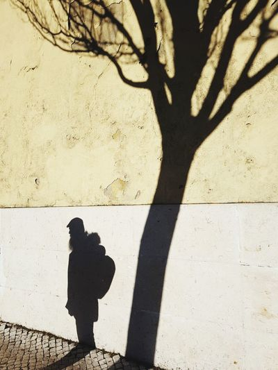 High angle view of the shadow of man and tree