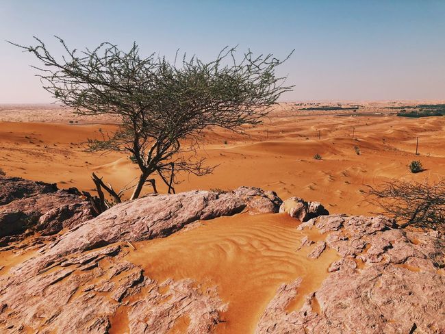 Dubai winter. Red sand and blue skies. Landscape Arid Climate Nature Rock - Object Scenics Tranquil Scene Shades Of Winter No People Tranquility Desert Physical Geography Outdoors Day Sky Beauty In Nature Sand Dune Clear Sky Colour Your Horizn