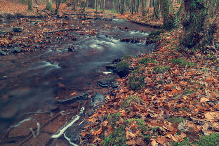 River in the forest in autumn. Art Beauty In Nature Backgrounds Forest Land Autumn Nature Water Plant Part Leaf Tree No People Day Change Scenics - Nature Motion Outdoors Flowing Rock Tranquility Plant Stream - Flowing Water Flowing Water WoodLand Leaves