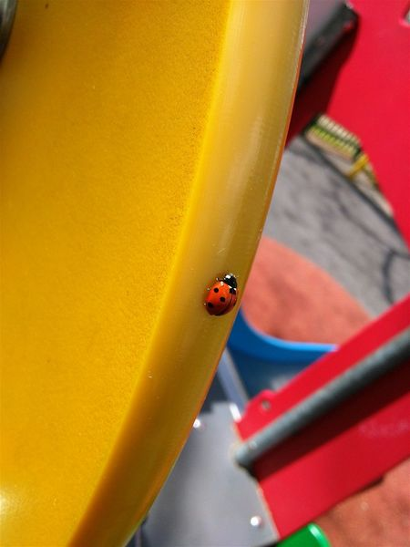Subhanallah, la beauté est partout. Coccinelle Ladybug Coccinella Colorful Childsplay Aire De Jeux Springtime Urban Spring Fever Printemps SubhanAllah Mashaallah Insect Bug Beetle Showcase April Playground Up Close Street Photography Colour Of Life Adapted To The City Colour Your Horizn