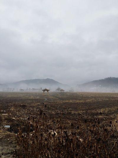 Foggy Field Kang Won Do Korea First Eyeem Photo