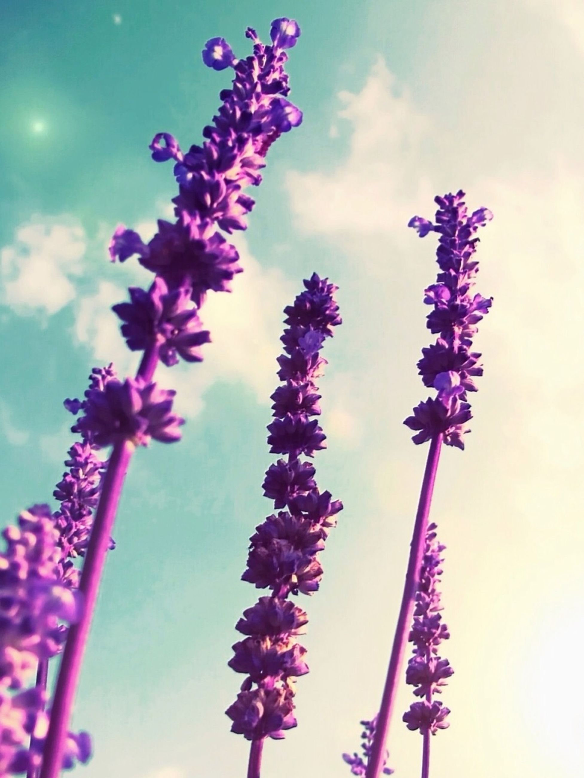 flower, low angle view, sky, purple, freshness, growth, fragility, blue, nature, beauty in nature, stem, pink color, day, focus on foreground, outdoors, close-up, no people, cloud - sky, plant, blooming