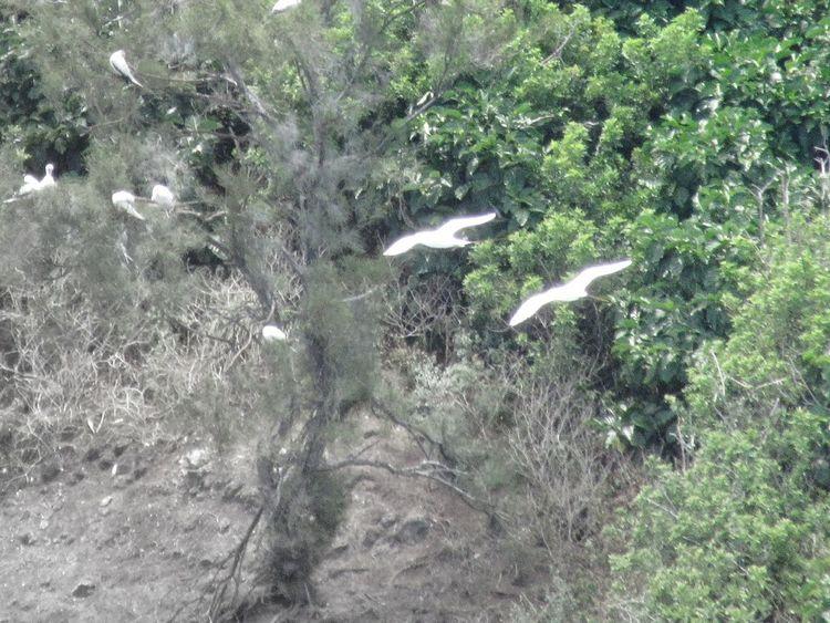 take flight Tropical Birds Nesting Nesting Birds Birds Of EyeEm  Bird Tree Water High Angle View Field Grass Plant Spread Wings Flight Flapping Winged Animal Wing Sea Bird
