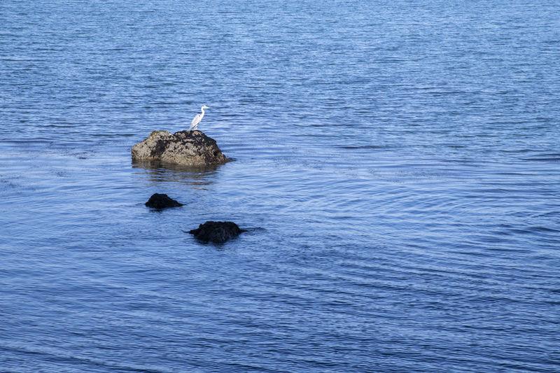 View of bird swimming in sea