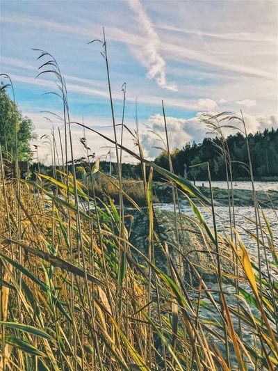 Sky Growth Nature Outdoors Landscape Plant Stockholm, Sweden