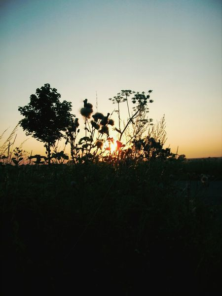 Nature Sonnenuntergang Schattenspiel  Schaumburg