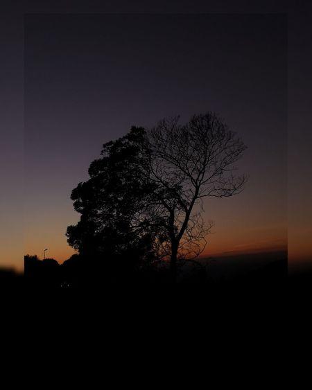 Tree Pixelated Sunset Silhouette Tree Area Single Tree Sky Close-up