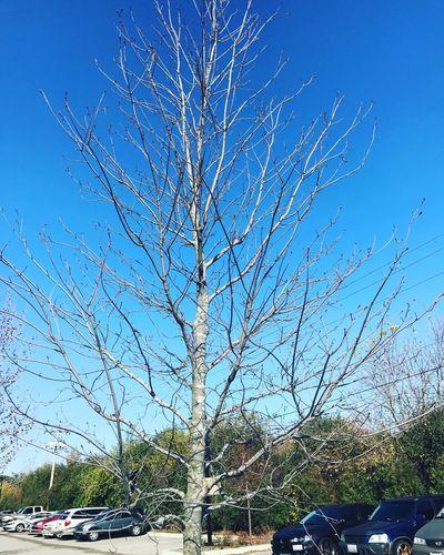 Clear Sky Tree Day Sky