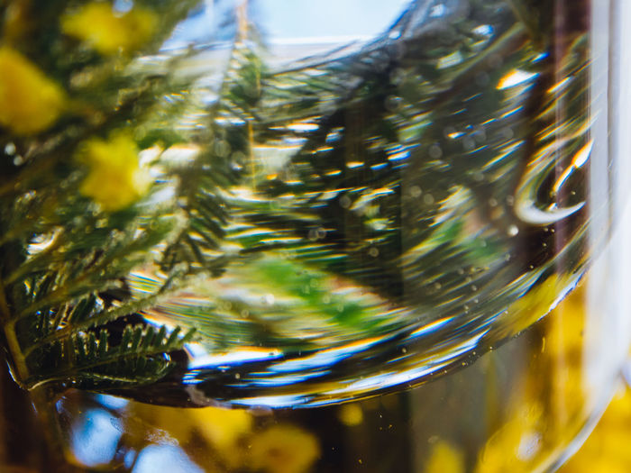 Close-up Glass No People Glass - Material Nature Selective Focus Transparent Plant Day Focus On Foreground Tree Green Color Water Outdoors Growth Beauty In Nature Detail Decoration Refreshment