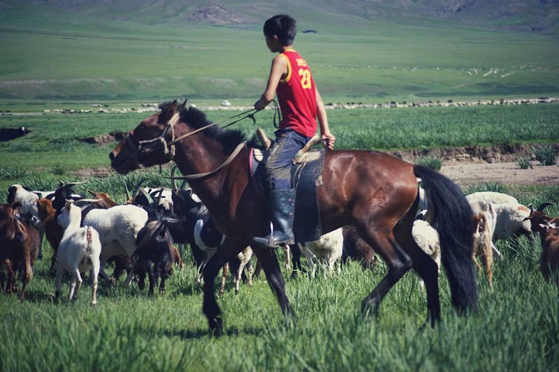 Nomadic Nomadic Life Mongolia Real People Монгол улс гэр Steppe Outdoors Day Child Herding Rural Scene Working Riding Horseback Riding Full Length Horse