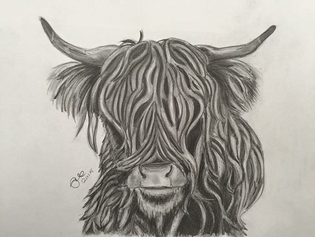Highland cow drawing by me HighlandCows EyeEm Nature Lover Black & White MyArt Art #illustration #drawing #draw #tagsforlikes #picture #photography #artist #sketch #sketchbook #paper #pen #pencil #artsy #in Myartwork Pencil Pencil Drawing Drawing Art