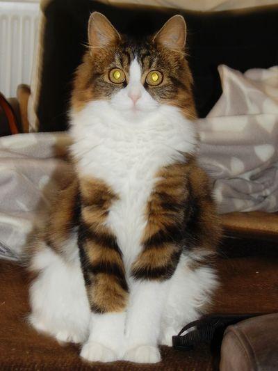 Furry Friend Little Princess Cat Lovers Cat Fluffy Alert Cat Watcher