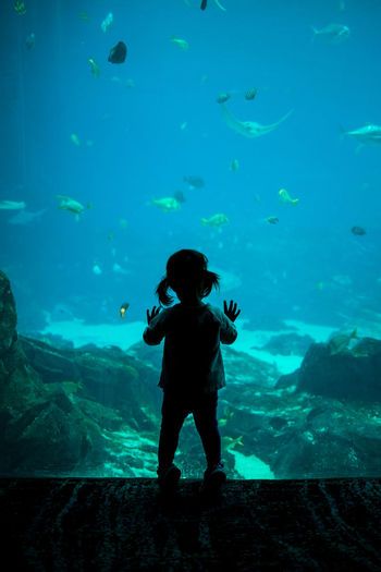 Little girl at the aquarium Family Fun Silhouette Silhouettes Whale Activity Aquarium Aquarium Life Aquarium Photography Aquatic Mammal Blue Child Childhood Curious Discovery Dolphin Explore Fish Girl Kid Learn Light And Shadow Little People Water
