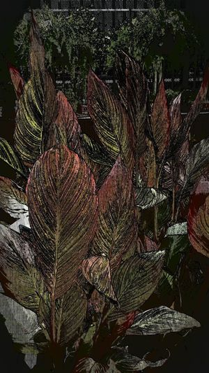 Beauty In Nature Close-up Garden Center Garden Photography Growth Leaf Nature Striated Leaves