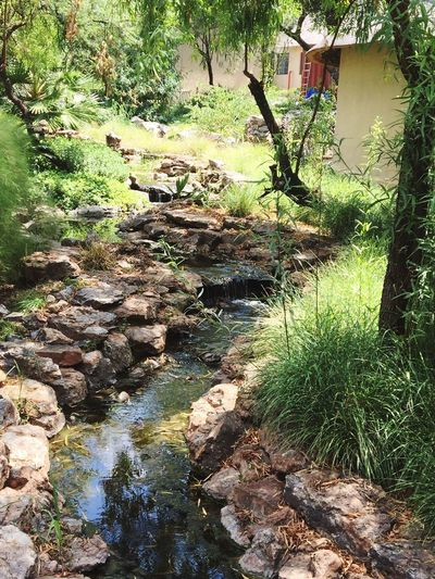 Peaceful view at the Lion and Safari Park. Walking past a stream as it hypnotizes you and puts you in a peaceful trans. KGH Desigirl777kgh Nature Tree Rock - Object Water No People River Outdoors Plant Beauty In Nature Travel Destinations Forest Landscape
