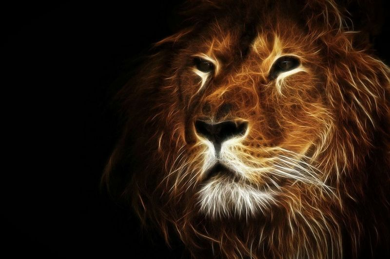 Fractalius Lion King Of The Jungle Lion King  Proud Not My Pic Processed Image Nature Beautiful Creature