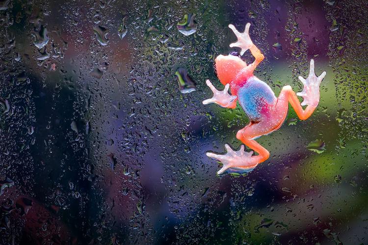 Dew Frog