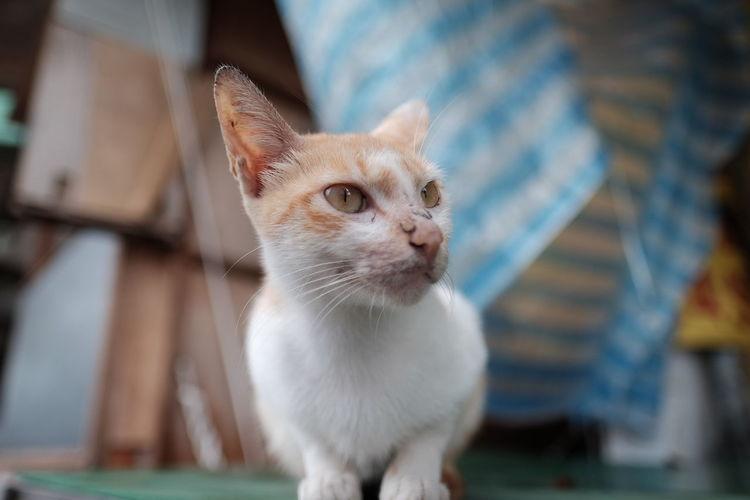 Cat Cat♡ Catsofinstagram 猫 😚 😚