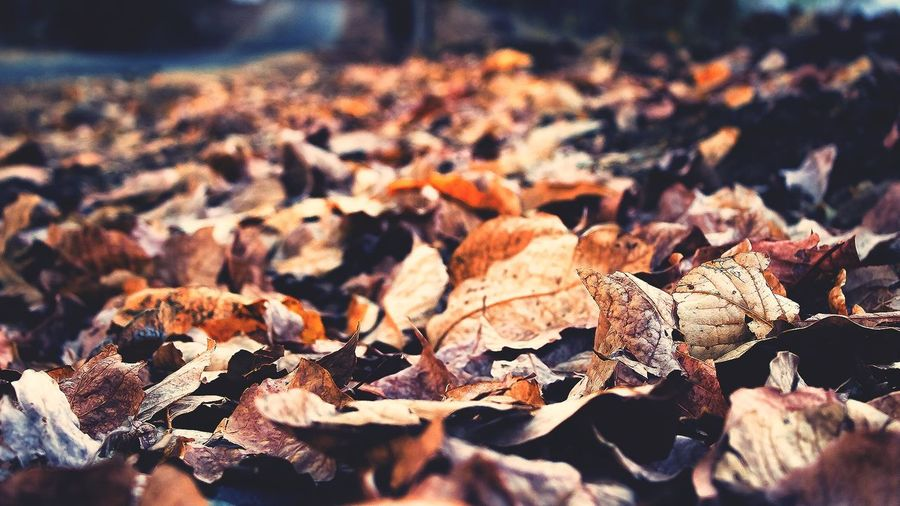 Autumn leaves 🍃 Autumn Leaf Dry Change Nature Close-up Outdoors Fragility Leaves Beauty In Nature Fallen Winter Scenics Backgrounds Winter MorningNature Ground Level Views Mother Nature Season
