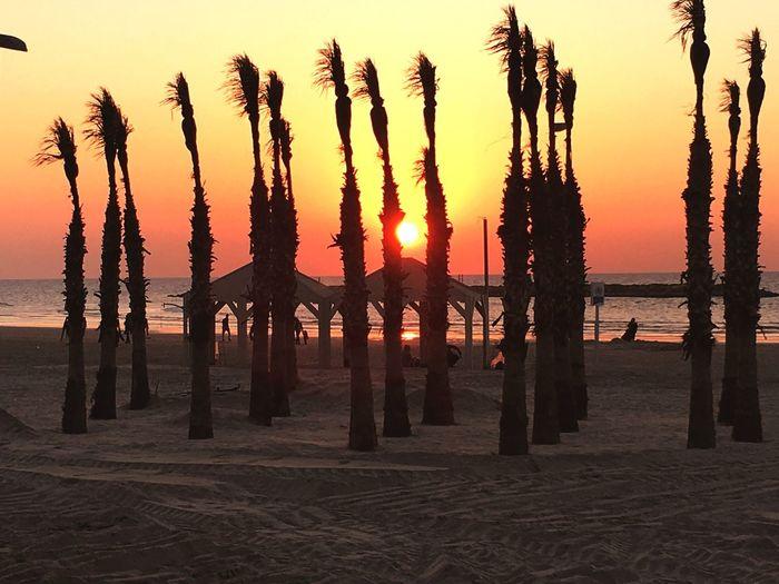 Sunset in Tel