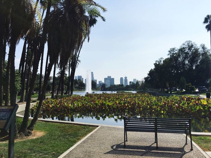 Fountain Lake Echo Park  Palm Trees Bench Calm Peaceful
