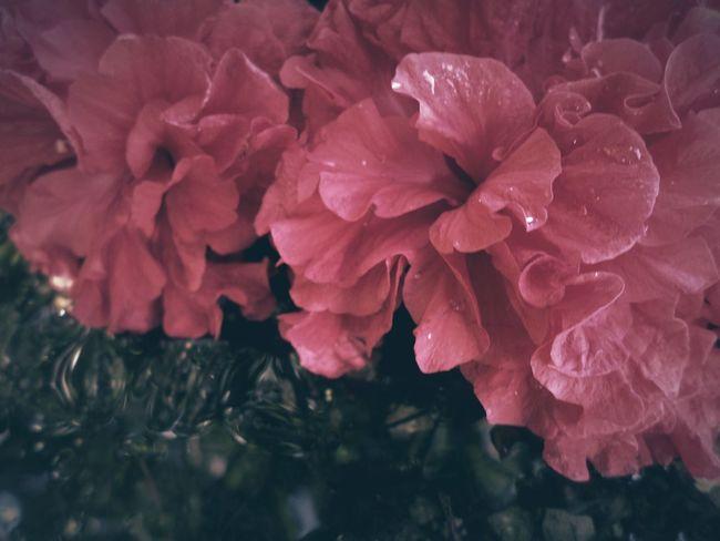සපත්තු මල ලා රතු පාටයි.... Water Reflection Nature Traveling Magic Two Are Better Than One Flowers Holydays Gift By Nature Colours Light And Shadow Colour Of Life EyeEm Nature Lover