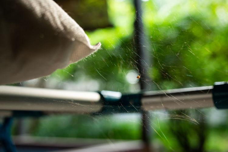 Spider on